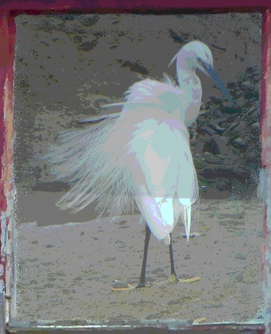 Boatyard Dreams Egret