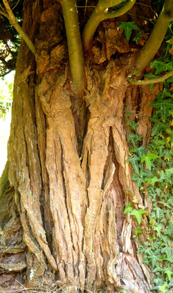 The tree spirits dancing