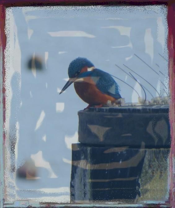 Boatyard Dreams Kingfisher