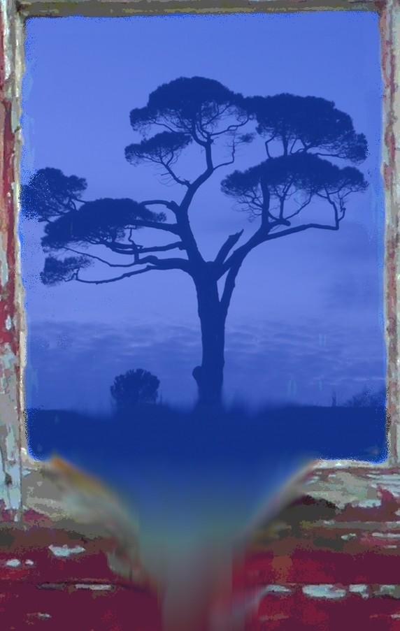 Boatyard Dreams Pine