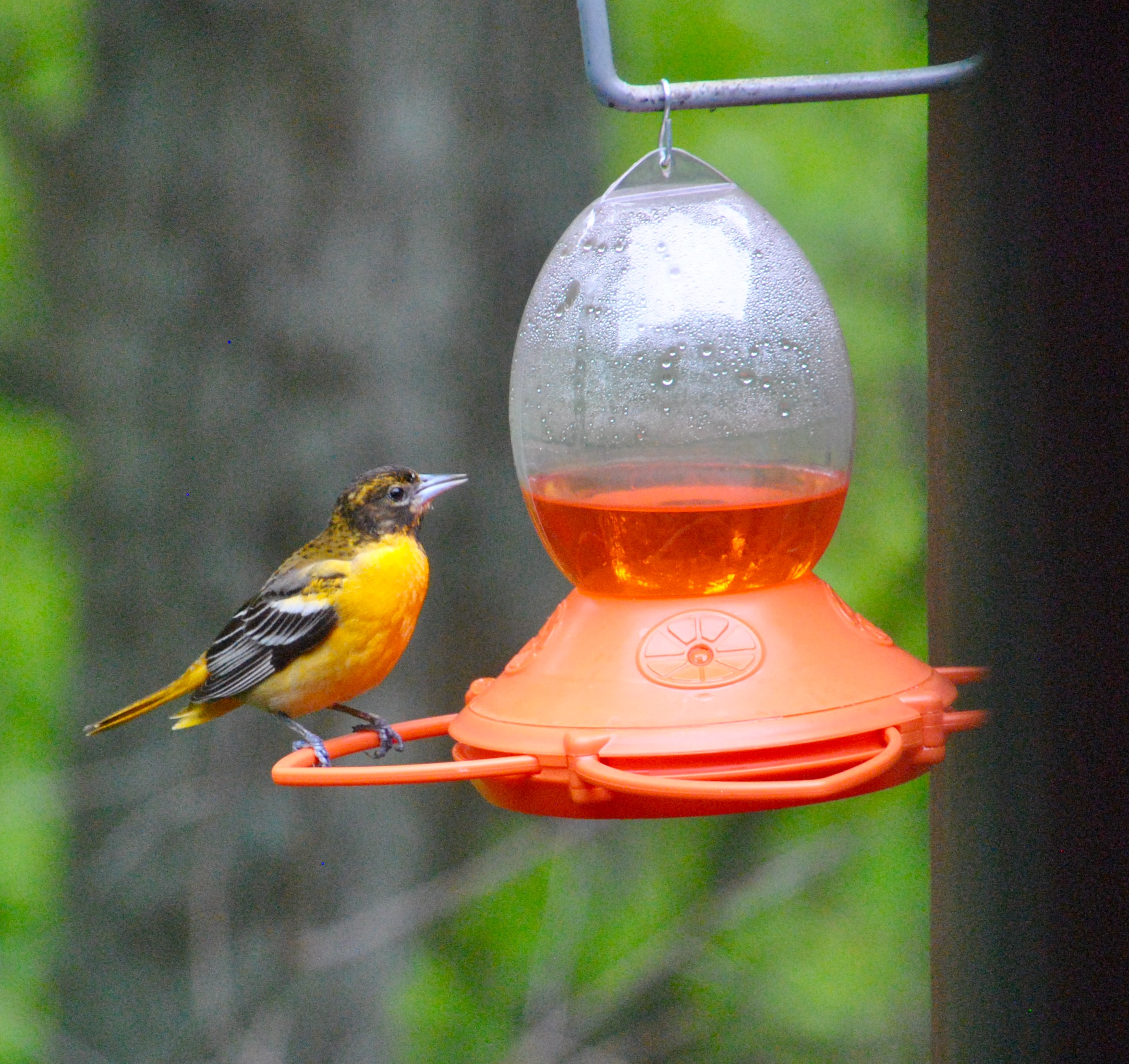 Baltimore Orioles 3