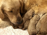 Sunny-and-pups-resized.jpg
