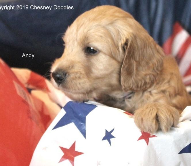 Andy005.jpg
