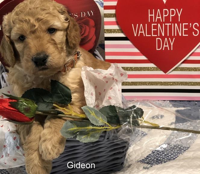 Gideon resized004.jpg