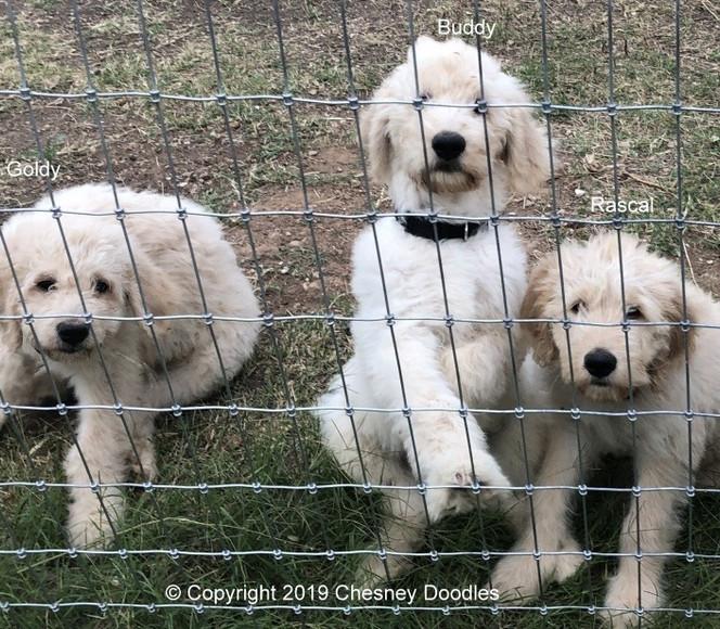 3 boys at the fence_edited.jpg