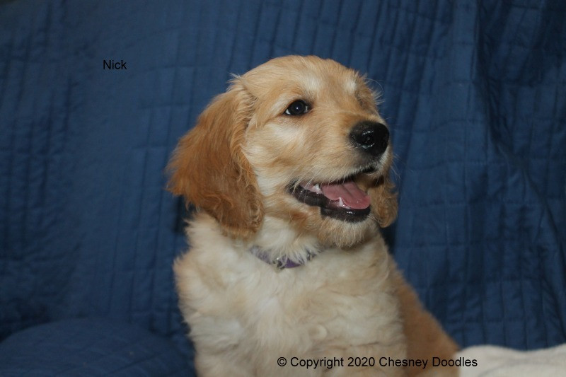 Nick resized006.jpg