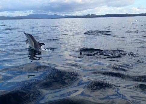 Dolphins off Clachtoll Assynt