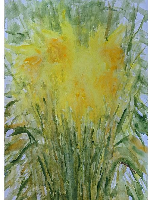 Melting daffodils