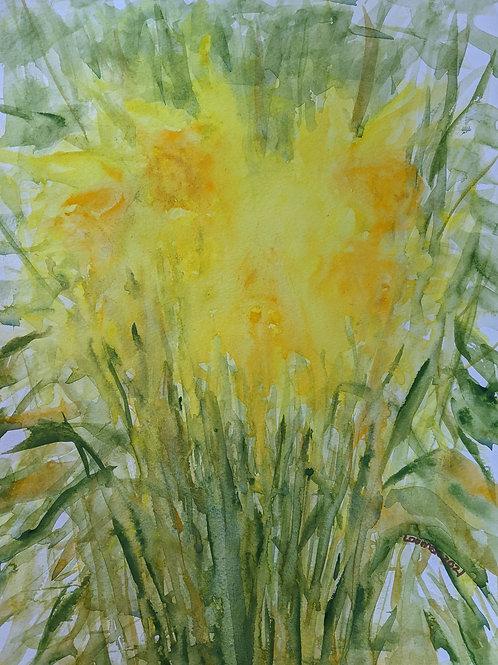 Watery Daffodils 2