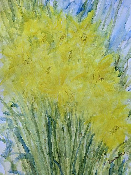 Watery Daffodils 1