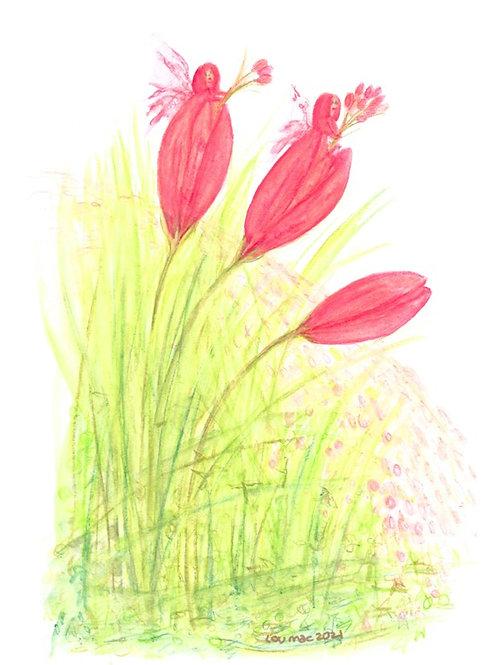 Tulip Heads