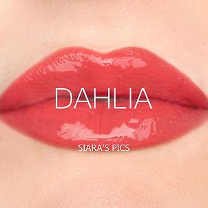Dahlia+(2).jpg
