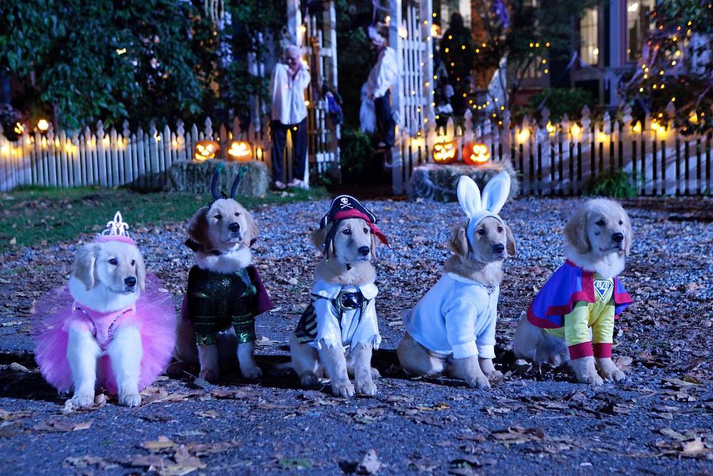 Dog Eat Pod Episode 2 Spooky Buddies