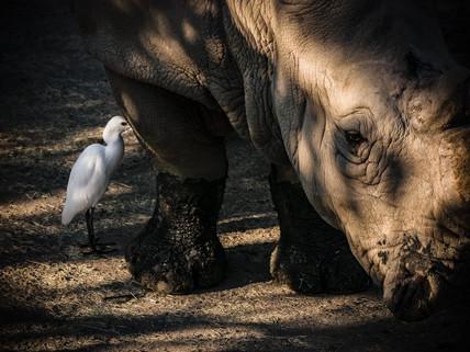 跨物種的友情