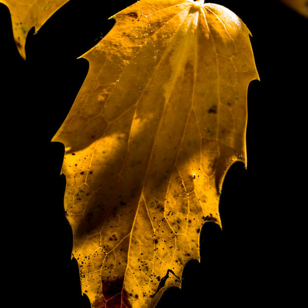 Autumn 2020 (17).jpg