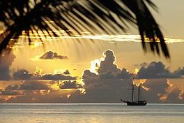 Coucher soleil, palmier et voilier.webp