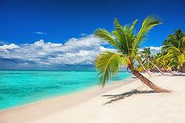 Palmier et mer.jpg