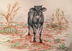 Cow Design