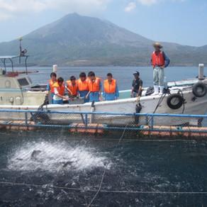 カンパチえさやり体験 (垂水市漁業協同組合)