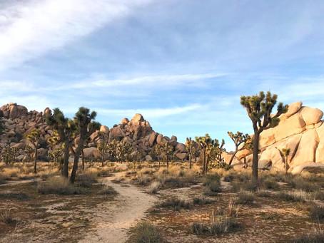 Wüstenliebe: auf geht´s nach Joshua Tree!