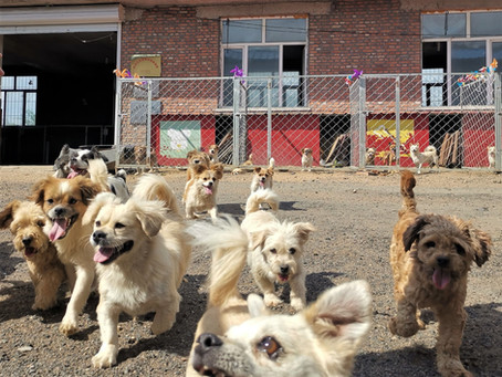 ANNOUNCEMENT: Duo Duo Project to Further its Work to End the Chinese Dog Meat Trade