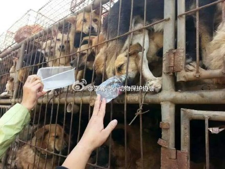 Post-Coronavirus - what does fighting the dog meat trade look like in 2020?