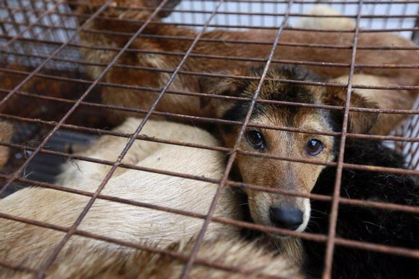 caged-dog-sadface.jpg