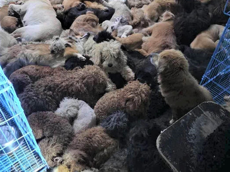 HOW LONG IS THE YULIN FESTIVAL IN CHINA?