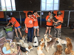 Busy volunteers inside a dog rescue shelter