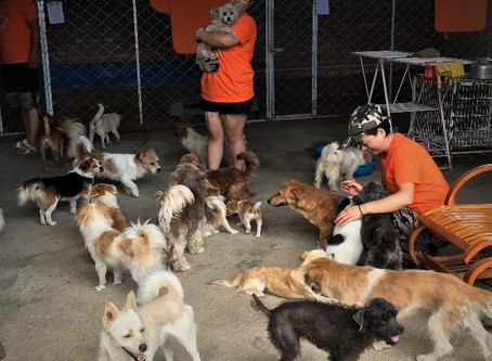 Our major plan to replace the cruel dog meat trade with pet business in China (Part 2)