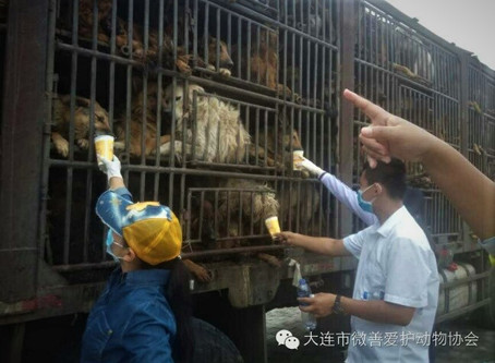 The worrying resurgence in Yulin's dog meat trade (Part 1)