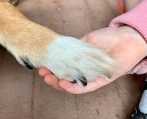 A dog resting her paw in a female volunteer's hand  - Duo Duo Project
