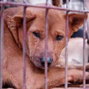 COLD, HARD FACTS ABOUT THE YULIN FESTIVAL IN CHINA