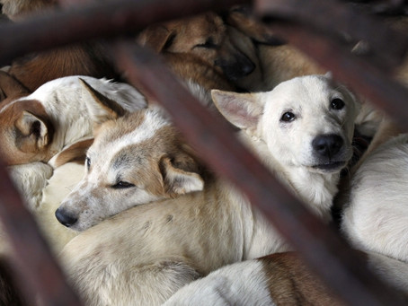 A REVIEW OF ANIMAL WELFARE IN CHINA