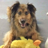 Desiree with Duck