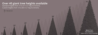 40 Giant Tree Heights Available