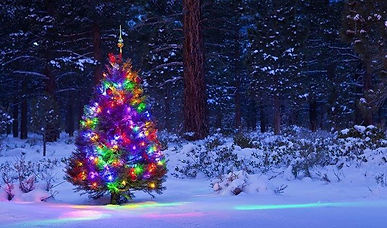 Decorted Outdoor Christmas Tree