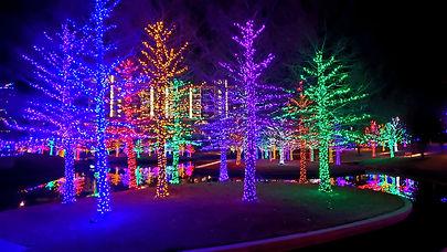 Holiday LED Light Trees