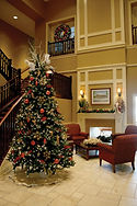 Sequoia Fir Christmas Tree