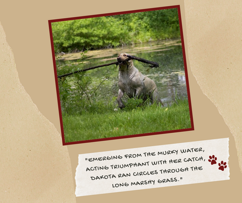 """Emerging from the murky water, acting triumphant with her catch, Dakota ran circles through the long marshy grass."""
