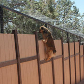 Desiree Jumping the Fence