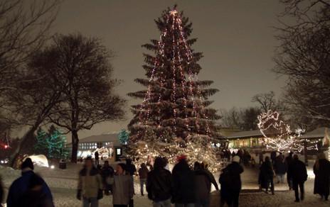 Christmas Tree Lighting at the Brookfield Zoo