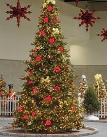 Olympia Pine Christmas Tree