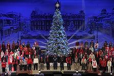 Olympia Pine Christmas Tree Idlewld Baptist Church