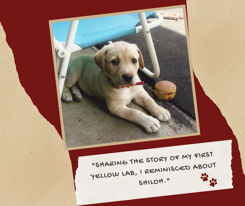 """Sharing the story of my first yellow lab, I reminisced about Shiloh."""