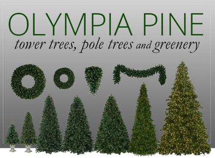 Olympia Pine Foliage