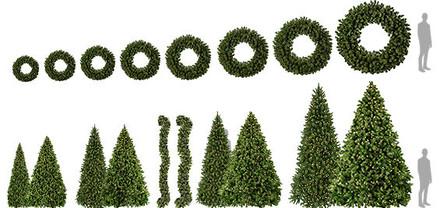 Sequoia Fir Foliage