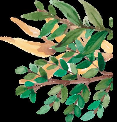 Plante Droite 1.png