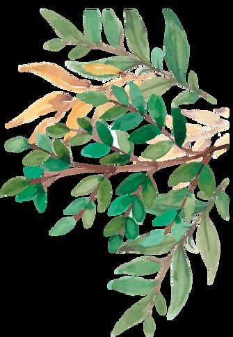 Plante 2.png