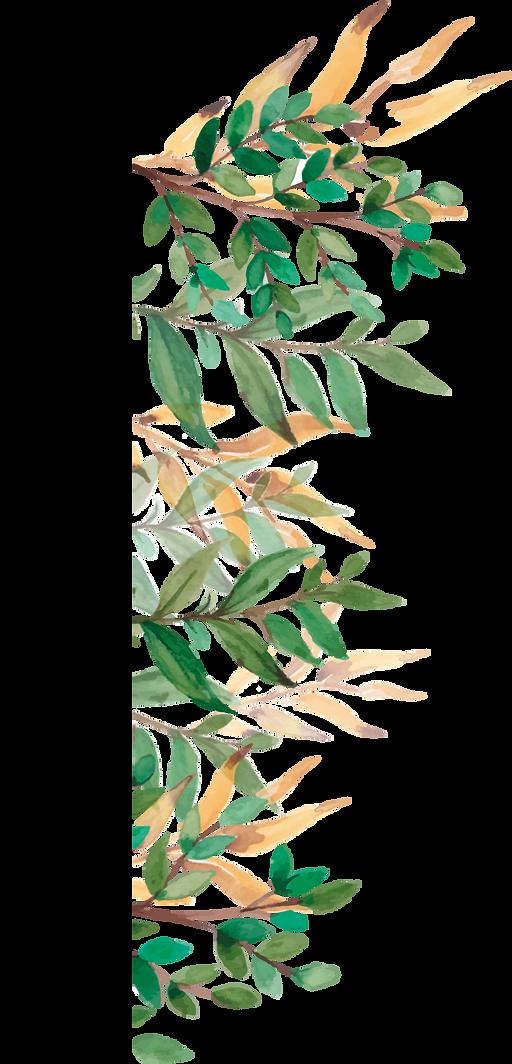 Plante.png